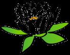 lotus-150693_640